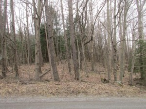 Nice Private Wooded Lot